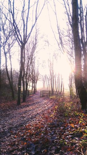 Woodland Adventures Tree Nature Outdoors Sunlight Beauty In Nature Tranquility Rural Scene Sunbeam Nature At Its Best No People Landscape Walking Exploring
