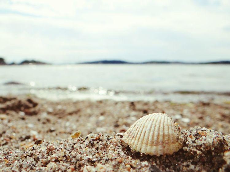 Shells🐚 Beach Photography Summer First Eyeem Photo