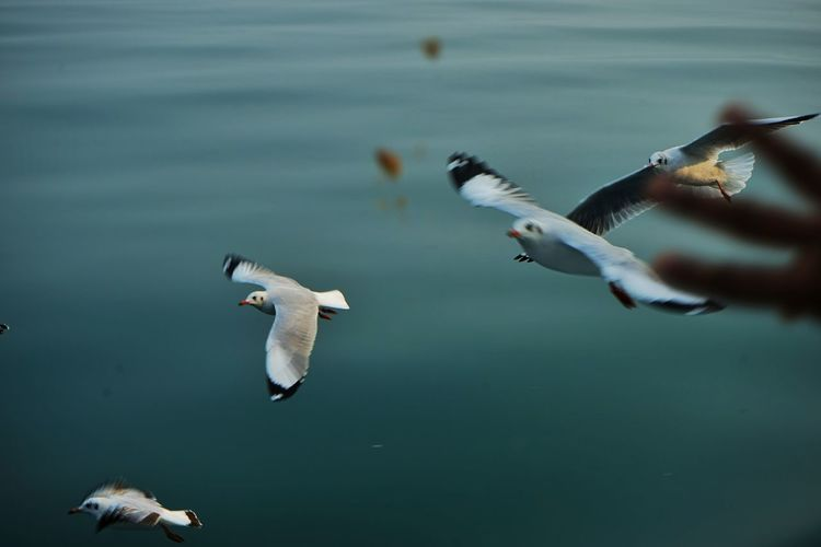 race for the biscuit Naf River Chittagong Bangladesh Ocean Island Seagull Bird Flying Feeding  Sony Alpha Flying Bird Animals In The Wild Animal Wildlife Spread Wings Animal Themes Outdoors An Eye For Travel