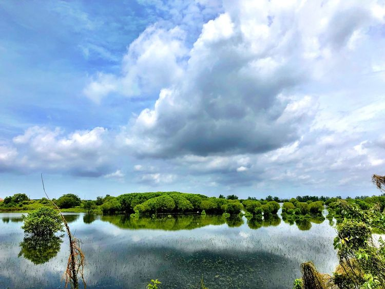 Sengigi Travel Photography Traveling Beautiful Indonesia Indonesia Photography  Turtle Island Sky Cloud - Sky Nature Beauty In Nature Water Tranquil Scene Tranquility No People Tree Day Outdoors Scenics Growth Landscape Lake Grass