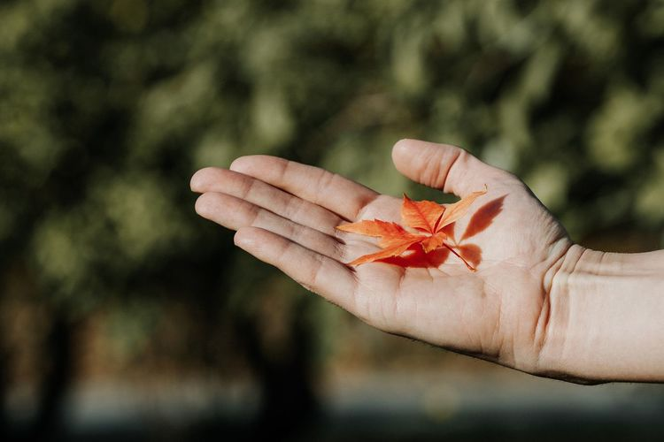 Human Hand Tree Forest Autumn Leaf Defocused Red Hand Close-up Plant Autumn Collection Palm Leaves Autumn Mood