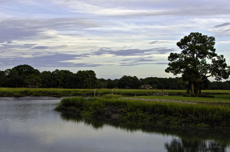 Beauty In Nature Grassy Hilton Head Island Standing Water Tranquility Tree Water Waterfront