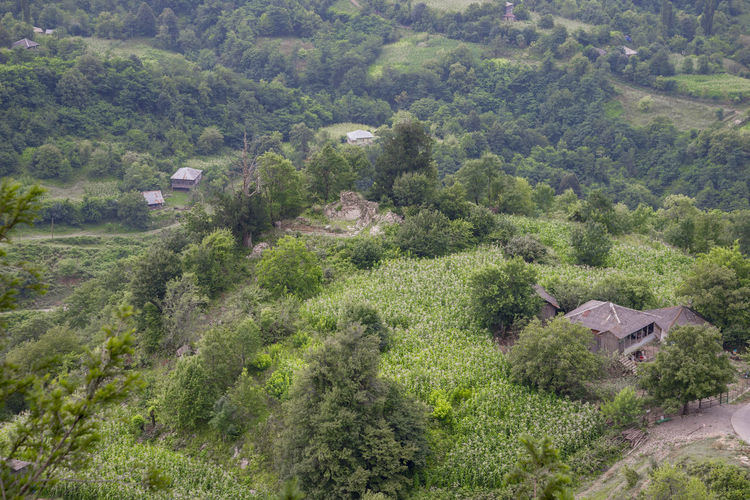 Village Kinchkha Tree Plant Environment Landscape Architecture Built Structure Scenics - Nature Land Nature Foliage High Angle View Forest Building No People Lush Foliage Hill Growth Green Color House Beauty In Nature Outdoors WoodLand Cottage