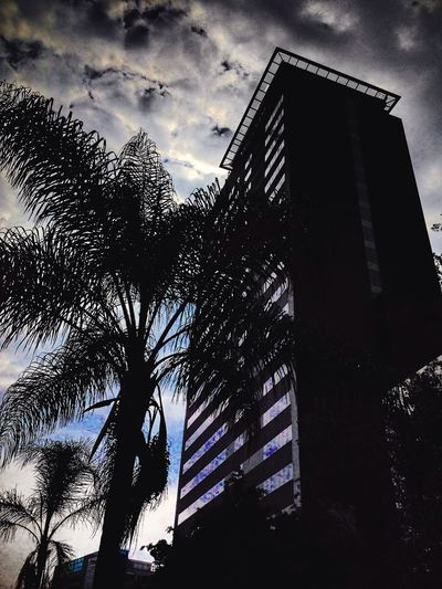 Low Angle View Sky No People Building Exterior Cloud - Sky Built Structure Architecture Outdoors Day Nature Tree