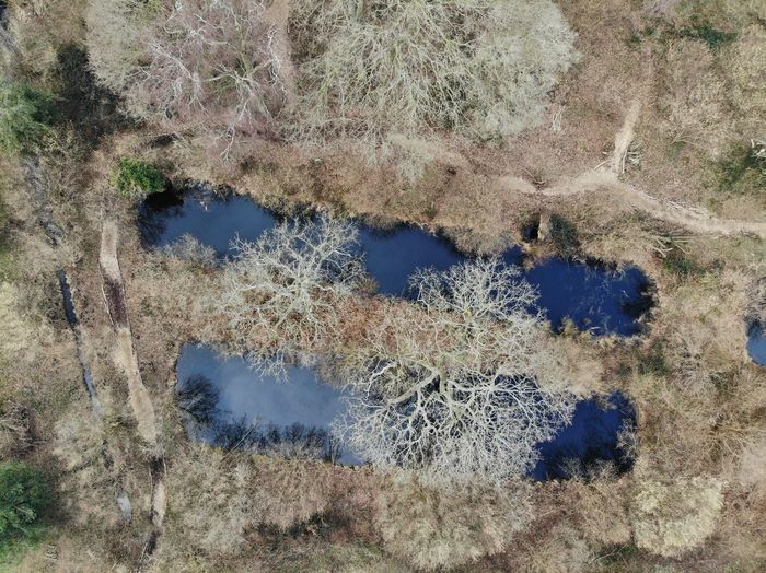 Aerial view of the fishponds at the ruins of Woking Palace, King Henry VIII's hunting lodge Ruin Fishponds Historical Place Dronephotography Woking Surrey Winter Trees Pond Henry VIII Woking Palace