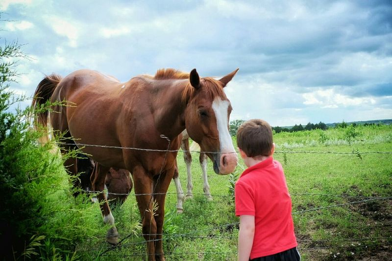 Feeding Animals Rural America Authentic Moments Don't Be Shy Horses Childhood Candid Photography Taking Photos A Day In The Life RePicture Learning