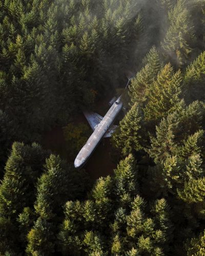 High angle view of airplane flying over trees in forest