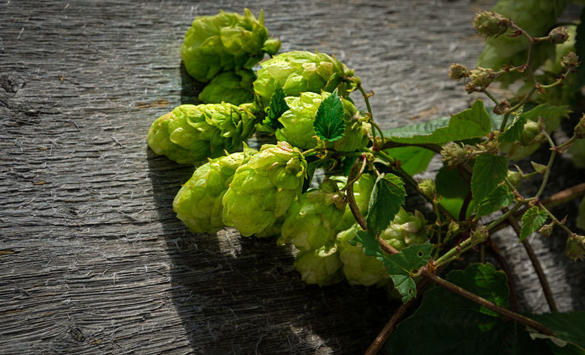 Beer Humulus Lupulus Brewing Close-up Day Focus On Foreground Food Food And Drink Freshness Fruit Green Color Healthy Eating High Angle View Hop Leaf Lupulus Nature No People Plant Plant Part Raw Food Table Vegetable Wellbeing Wood - Material
