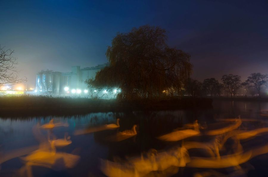 Dance of the Night Birds Blue Wave Night Photography Night Lights Landscape Photography Moody Sky Long Exposure Riverside River View Blue Night River Reflections Swans Beautiful Nature Northamptonshire Wildlife At Night Blue Sky Winter Lights Need For Speed