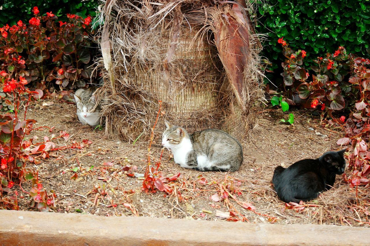 animal themes, domestic animals, domestic cat, mammal, pets, outdoors, day, leaf, no people, autumn, plant, one animal, feline, nature