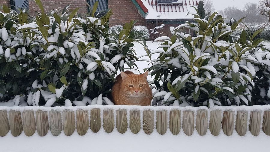 Portrait of a cat in a snow