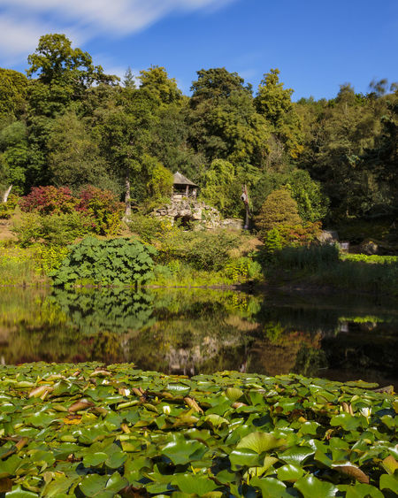 Grotto and Pond at Chatsworth House in the Peak District National Park Bautiful Britain British Chatsworth Green KINGDOM Lily National Plant Pond Tree Blue District England English Flower Garden Grotto House Lake Landscape Park Peak Sky Water