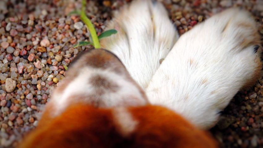Sitting in the sand chewing on a weed! Lol silly girl.😊 Dogs English Shepherds Rocks Sand I Love My Dog Farm Life Country Life Getting Creative No People Close-up Outdoors Summer Dogs Weeds Are Beautiful Too Silly Showcase: January Macro Beauty Showing Imperfection