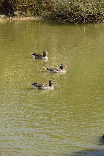 Photo of three