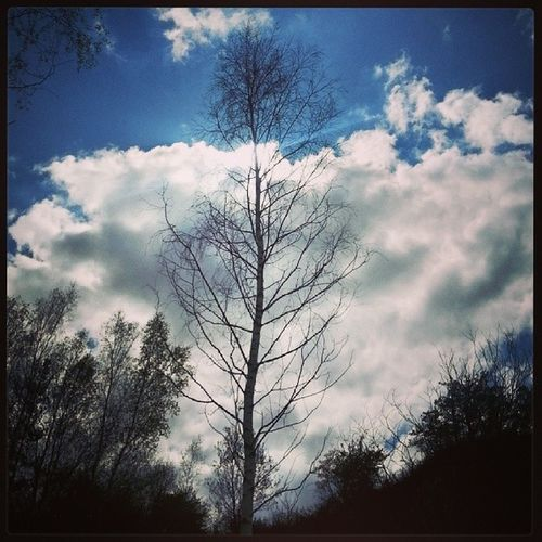 Geostrefa Jaworzno Poland City park landskape nature tree skylovers sky sun clouds blue