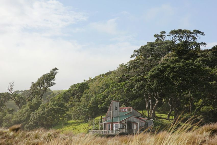 Newzealand Outdoors Northland Beach House Hideout Cabin Cabin In The Woods Secret Places Forest Art