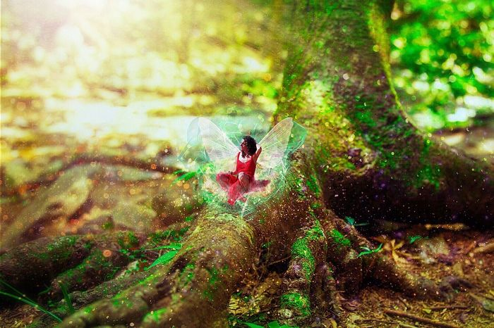 Fairy Fairytale  Fairytales & Dreams Woods Forest Magical Forest The Magic Mission