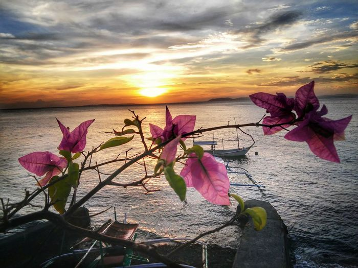 Flower Nature Sunset Water Beauty In Nature Cloud - Sky Outdoors Sky Horizon Over Water Lifestyles Spring Sea Plant Pink Color Beach Leaf Tranquility Scenics Day Flower Head Summer Fashion Sports Love Art Sommergefühle