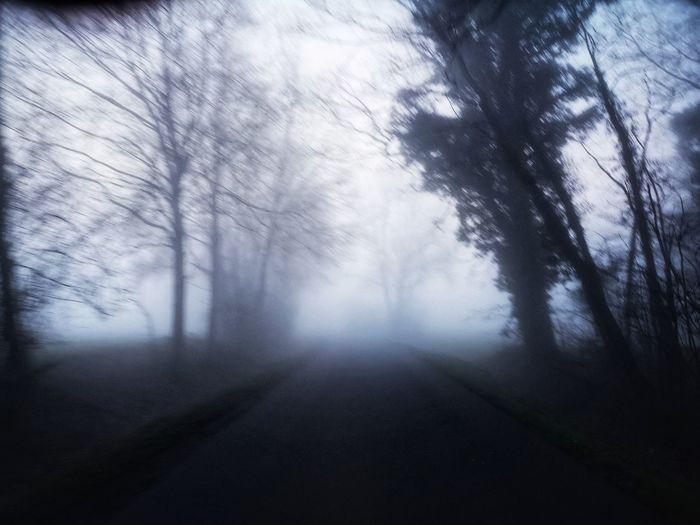 Fog Foggy Foggy Morning Tree Fog Forest Landscape Tree Trunk Pine Woodland Weather Woods