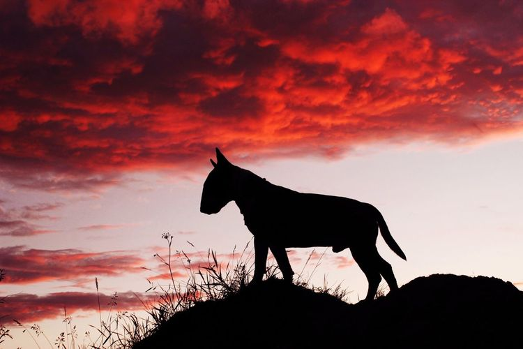 Silhouette horse standing on landscape against sky during sunset