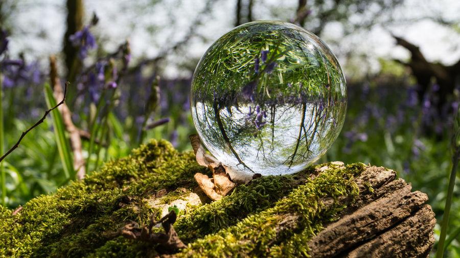 Close-up of ball on tree