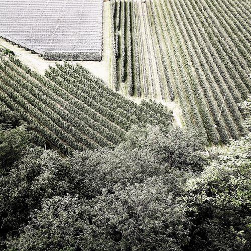 Backgrounds Day Full Frame Pattern Textured  No People Outdoors Nature Apple Trees Garden Southtirol Südtirol Lana
