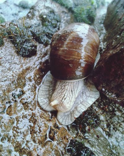 Schnecke Schneckenhaus Schnecken Schnecke Auf Stein Schnecke Bei Regen Auf Stein Schnecke Bei Regen Slug Snail Slugs Snails Snail🐌 Snail Collection Snails🐌 Snail Photography Snail Slug Collection Eye4photography  EyeEm Best Shots EyeEm EyeEm Gallery