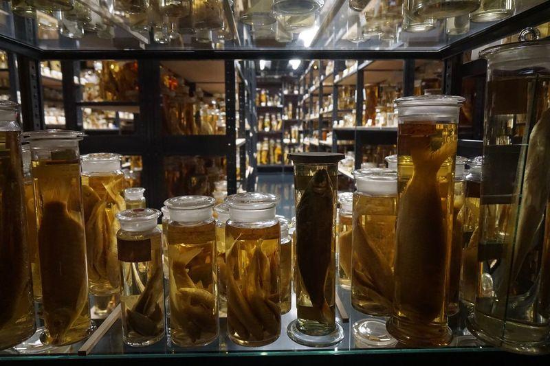Berlin Museum Museum Exhibits Naturkundemuseum Berlin  Bottle Close-up Exhibition Glass - Material Indoors  Jar Museum Museum Of Natural History Naturkunde Naturkundemuseum No People