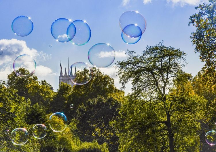 Tree Bubble Low Angle View Nature Day No People Mid-air Outdoors Growth Beauty In Nature Sky Bubble Wand Blue Fragility Castle Bubbles Queen Victoria  Stjamespark Westminster Enchanting Postcode Postcards