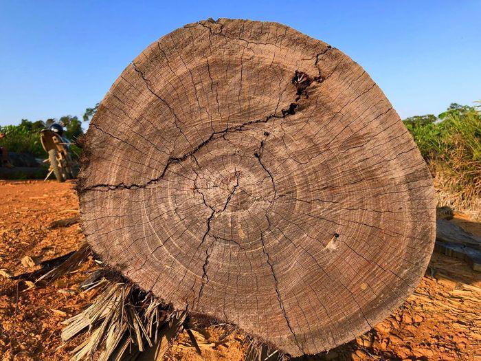 Close-up of log on land