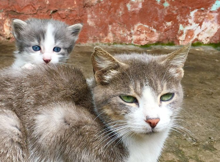 Mammal Cat Feline Domestic Cat Pets Domestic Domestic Animals Animal Eye