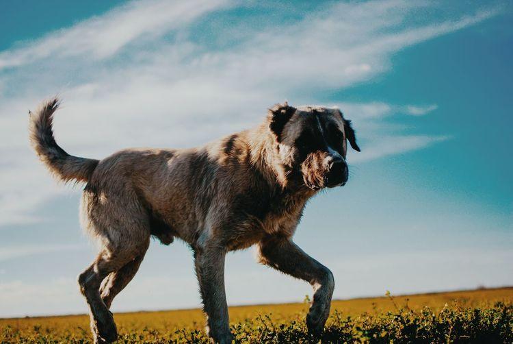 One Animal Animal Mammal Animal Wildlife Nature Standing Sky