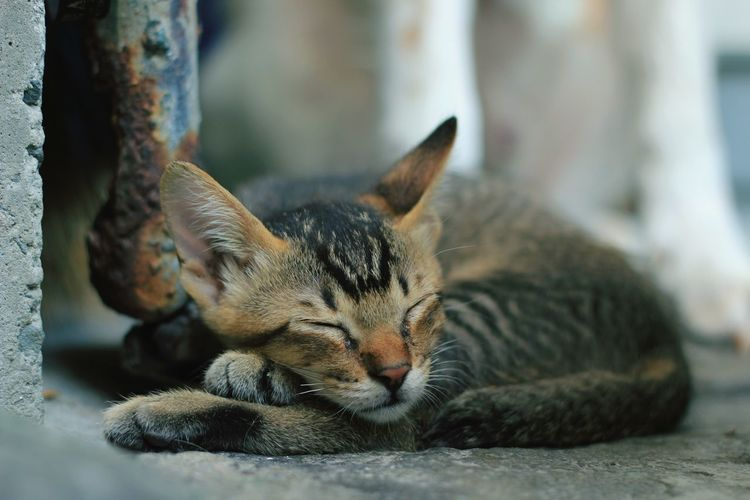 Close-up of stray cat sleeping on footpath