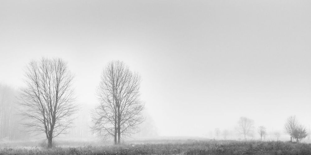 Trees in the fog Bare Tree Field Foggy High Key Landscape Minimalism Sky Tranquil Scene Tranquility Tree Weather