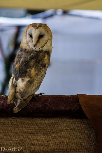 Animal Themes One Animal Bird No People Owl Photography Beauty In Nature Nature Tranquility Nikon