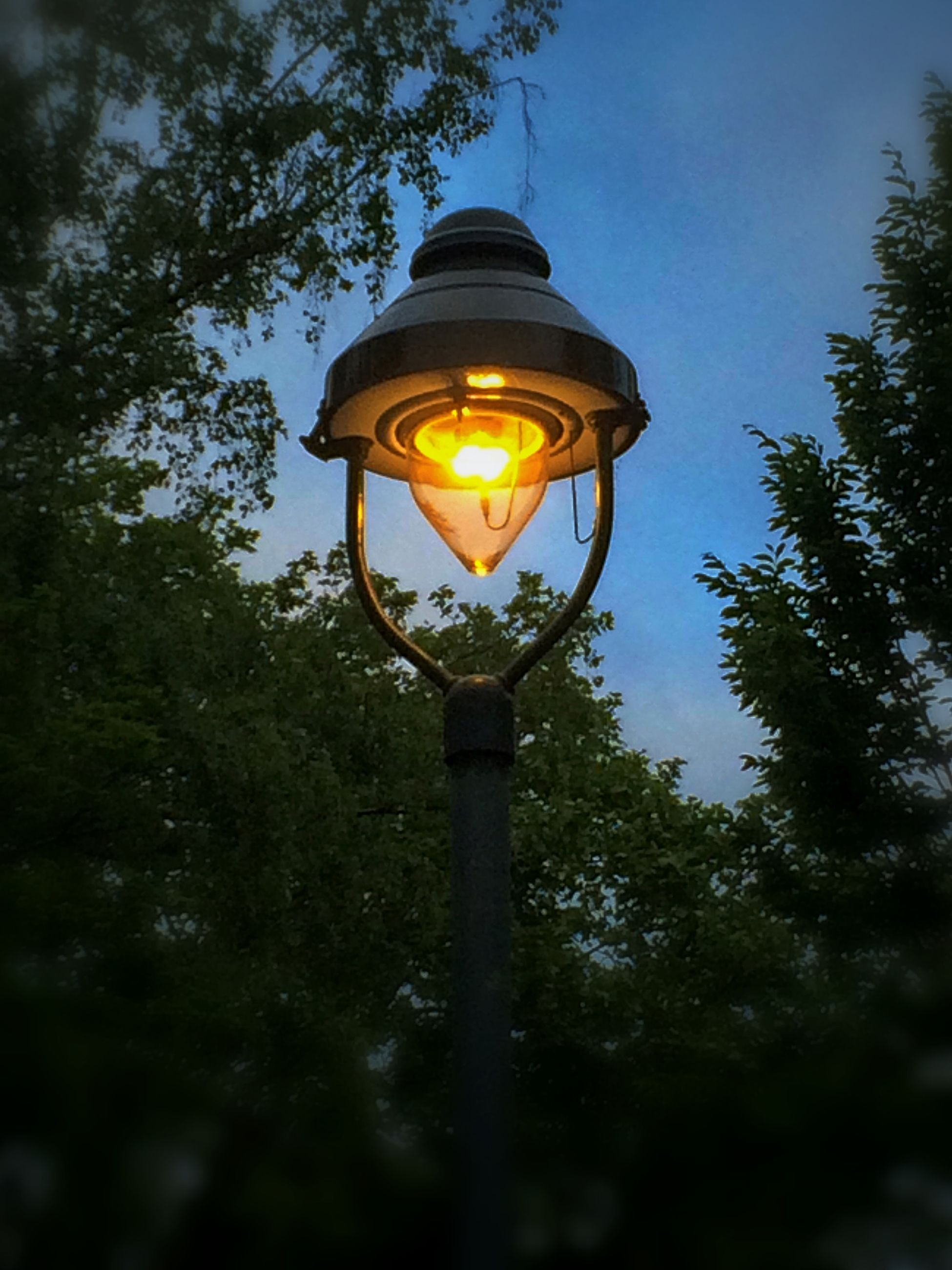 lighting equipment, illuminated, street light, tree, low angle view, electricity, electric light, lantern, light bulb, sky, glowing, lamp post, electric lamp, clear sky, lamp, no people, dusk, outdoors, nature, growth