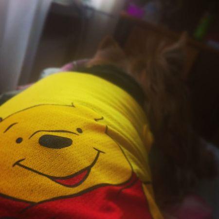 Vinnie The Pooh Tshirt onmyyorkiyorkshireterrirerussiayellowsummer
