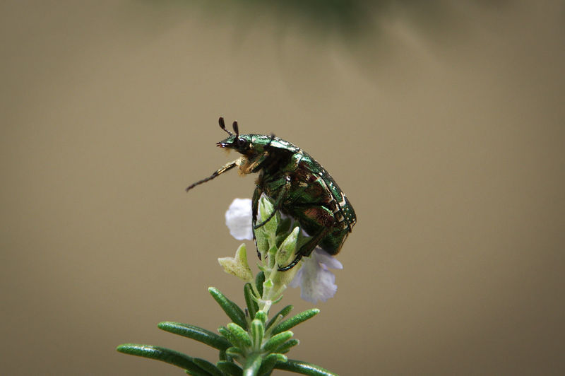 Close-up of insect on flower