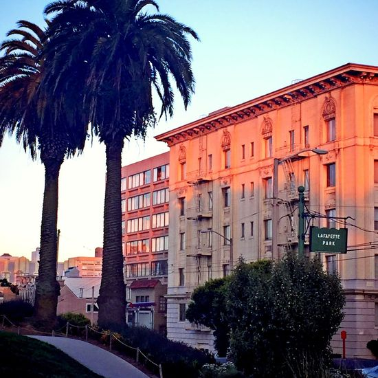 Palm Trees At The Park Neighborhood San Francisco Sunset_collection Historical Building Urban Landscape CaliLifeStyle