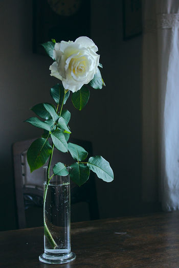 Rose in vase on table at home