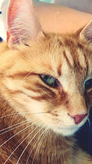 My C:My cat] Cat Cats Cat♡ Cat Lovers My Cats