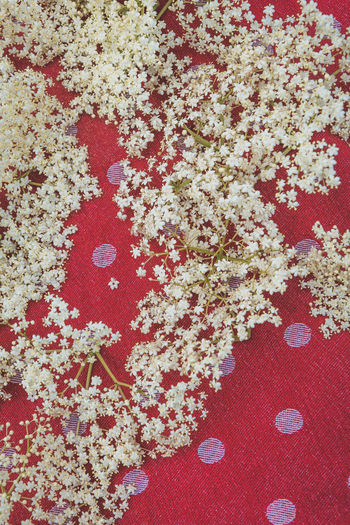 Freshness Backgrounds Beauty In Nature Close-up Directly Above Elderberry Elderflower Floral Pattern Flower Flowering Plant Food Food And Drink Freshness Full Frame Healthy Eating High Angle View Indoors  Nature No People Pattern Red Still Life Table Textile White Color