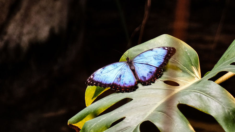 One Animal Animal Wildlife Insect Animals In The Wild Animal Themes Animal Invertebrate Plant Part Leaf Close-up Plant Beauty In Nature Nature Animal Wing No People Day Flower Focus On Foreground Butterfly - Insect Growth Outdoors Butterfly