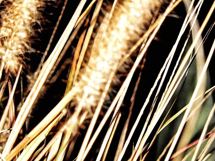 Grasses At Night Nightphotography Night Photography Grasses Nature Is Art Nightshot