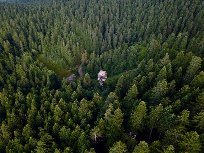 Drone  Beauty In Nature Coniferous Tree Day Dronephotography Droneshot Environment Evergreen Tree Fir Tree Foliage Forest Green Color Growth High Angle View Land Landscape Lush Foliage Mountain Nature No People Outdoors Pine Tree Plant Scenics - Nature Tranquil Scene Tranquility Tree WoodLand