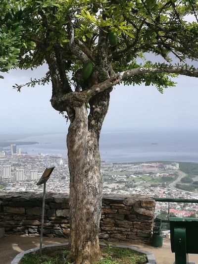 Tree that utensils are made from its fruit. Port Of Spain , Trinidad Capital View The Photojournalist - 2018 EyeEm Awards Tree Cityscape Water Sea Beach Tree Trunk Sky Close-up Horizon Over Water