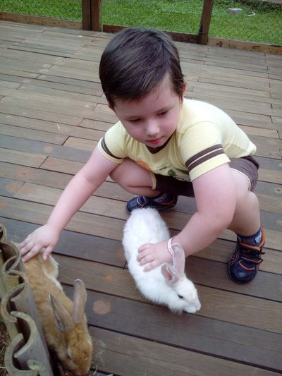High angle view of boy playing with bunnies on deck