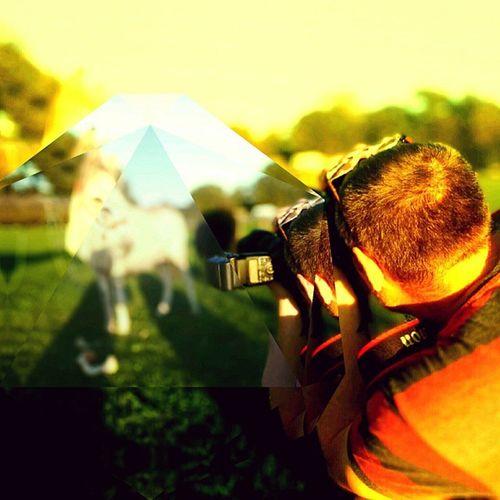 Donkeyshot Throughfakeglass Focus