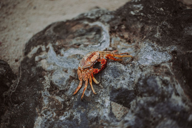 High angle view of crab on rock