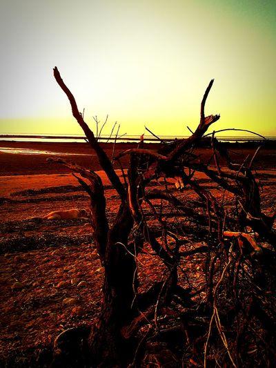 Wood EyeEm Best Shots - Nature Eye4photography  Eyemphotography EyeEm Animal Lover Beachphotography Showcase: February EyeEm Nature Lover wood Enjoying Life Taking Photos Relaxing N South Australia Yorke Peninsula